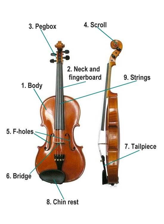 قسمت های تشکیل دهنده ساز ویولن
